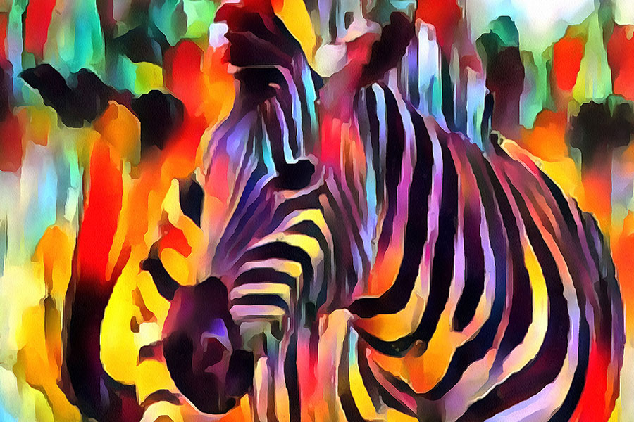 The Dance of Zebra Colors