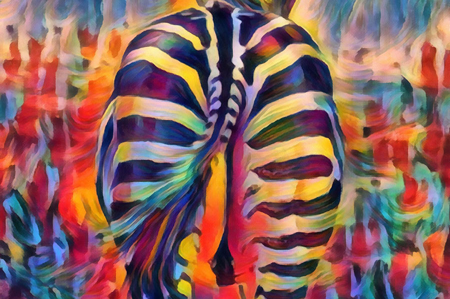 The Dance of the Zebra's Tail